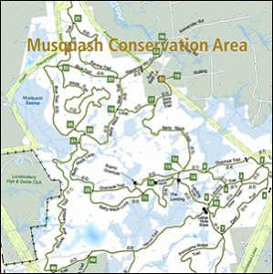 Musquash Conservation Area